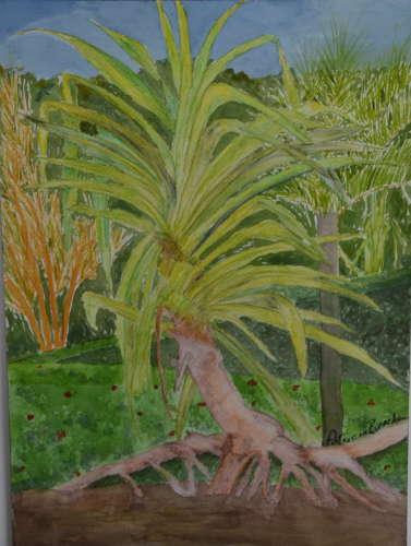 "Costa Rica Catopsis, watercolour pencils/wc, 10""x14"" (framed: 16""x20""), $$300.0000"