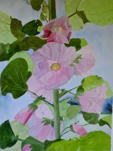 "GC Hollyhocks, w/c, 6""x7"", $$5.0000"