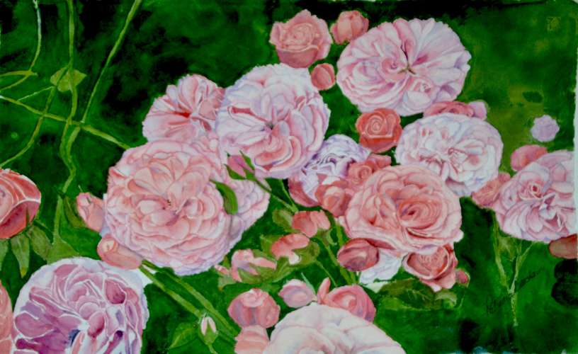 "GC Roses of Blarney,  w/c, , 5""x6"", $$5.0000"