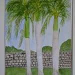 Dominican Palm